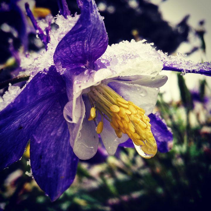 Frosty Spring 1 - Amanda Hovseth