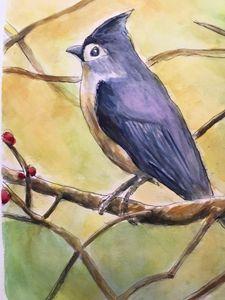 A Blue Jay, watercolor/pen, 1X14