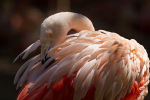 Pink Flamingo - Kevin Case