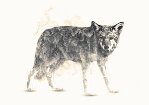 Wolf / Low Saturation