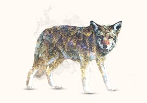 Wolf / Colored