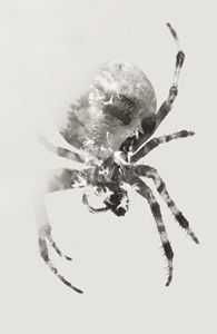 Skullspider / Black and White