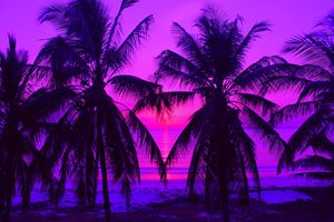 Pink Palm Trees by the Indian Ocean