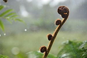 Clinging Rain