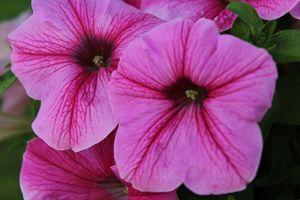 Wonderful, color flower.