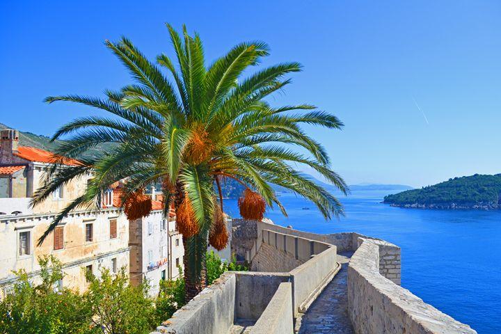 Croatia / Dubrovnik - Great Palm - Wanderlust