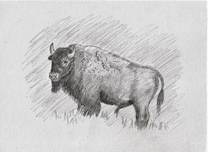 The Buffalo - Ernie Westfall