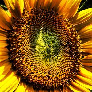 Sun Reacher