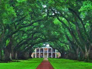 Oak Plantation - Umbrella of Trees