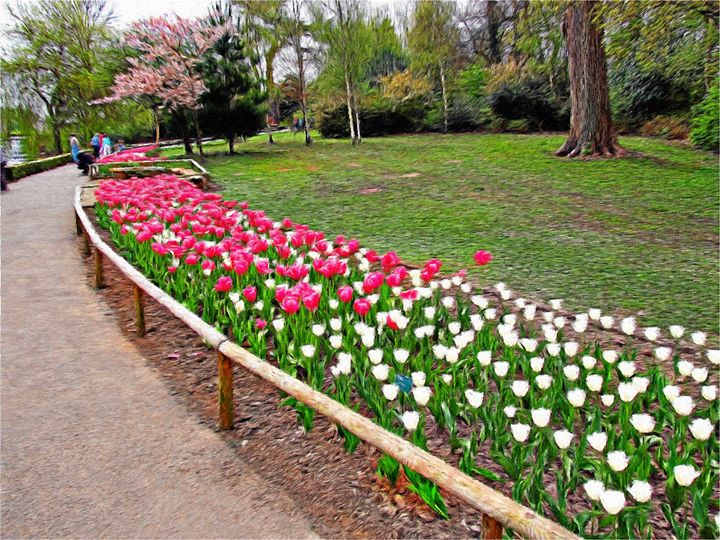 The Tulip Path - Rogers Art Shop