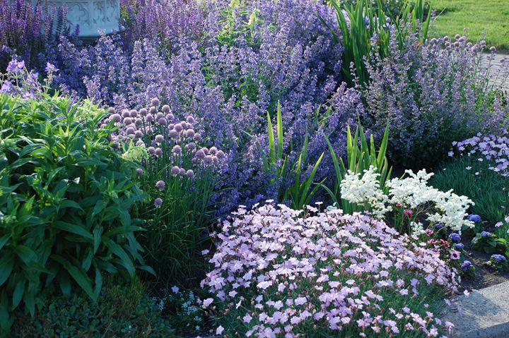 Sea of Purples - NorthShoreSDT