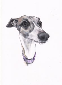 Holly Whippet