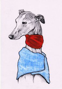 Darcy Whippet
