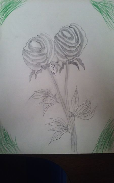 2 roses - AMOLES CORPORATION