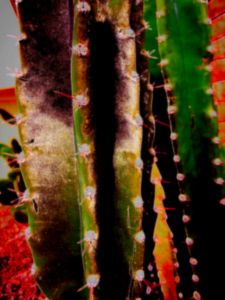 Prickly 1
