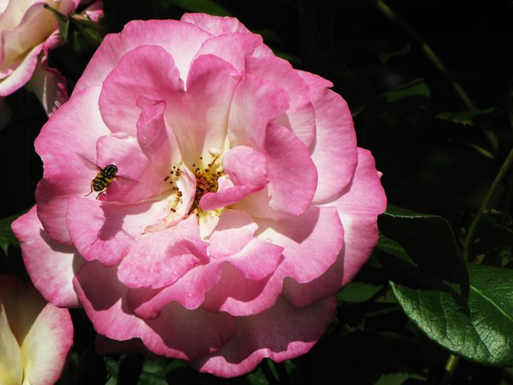 Flower - Eilidh Campbell