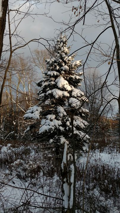 Winter Pine - Wandrnrose Designs