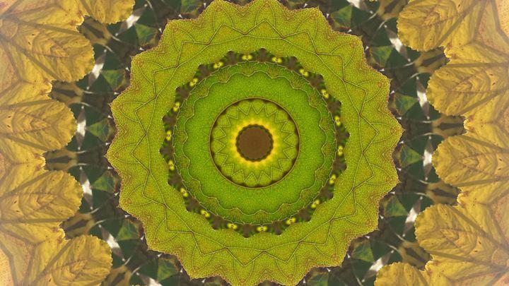 Circle of Leafy Green - JL Robinson
