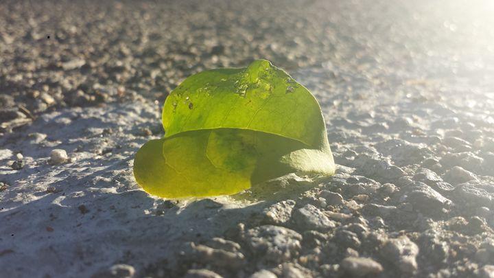 Sunny Leaf on Concrete - JL Robinson