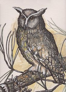 Owl In A Pine - DMO