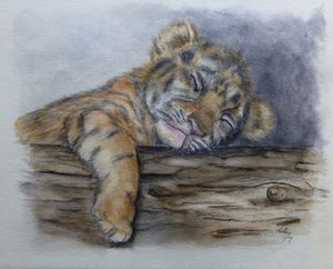 Sleeping Tiger Cub - Kelly Mills Paintings