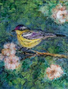 Fancy Finch