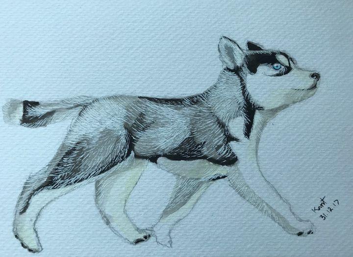 Dog husky - Kant
