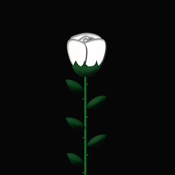 White Single Large Rose on Black - Laura Nybeck's Art