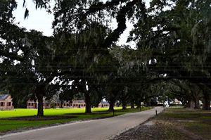 Boone Hall Plantation - Catherine Sherman