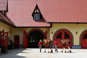 Budweiser Clydesdales, New Hampshire