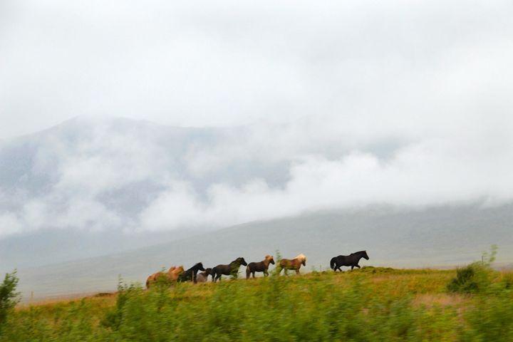 Icelandic Horses Running - Catherine Sherman