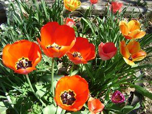 spring back