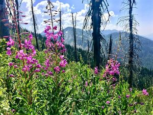 Flowers Of Jewel Basin