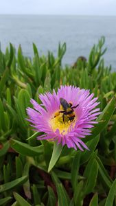 Pretty flower and a bee at LA Jolla
