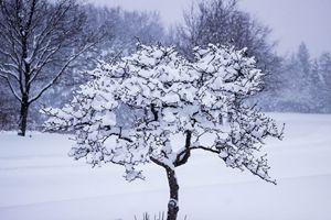 Tree Frosting