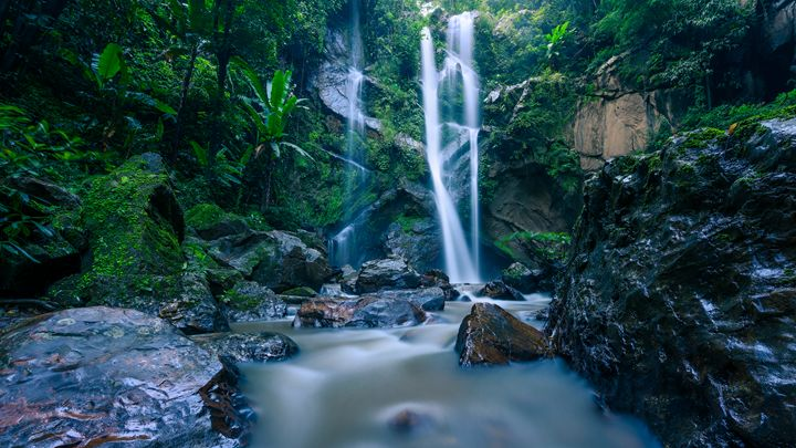Jungle Spirit - Andreas Hagspiel Photography