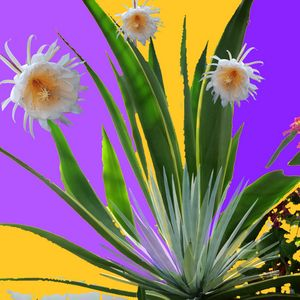TROPICAL FLOWERS & AGAVES