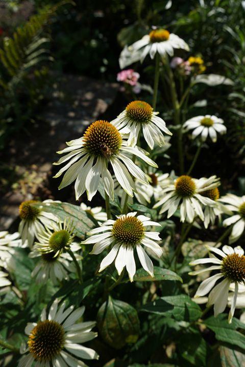 Bee On A Flower - Dan Jones Photography