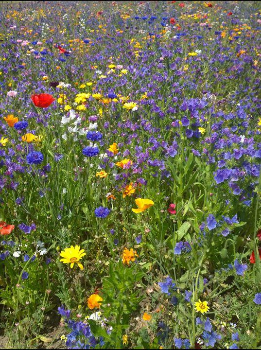 Meadow of Flowers - Dan Jones Photography