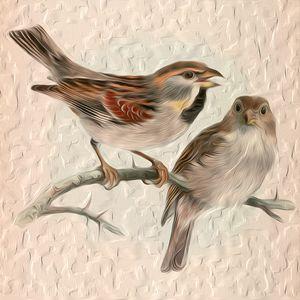 Sparrows - Graphic Eleven
