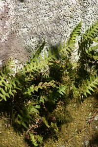 Abstract Ferns