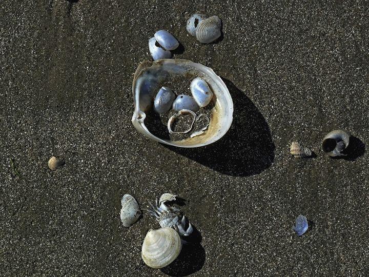 The Beach - Robert Brown Photography
