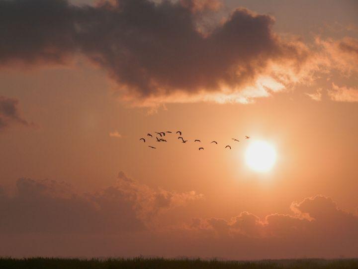 Dawn Flight - Robert Brown Photography