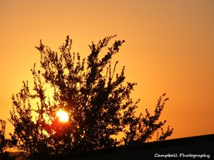 Mesquite Sunset