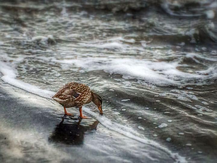 Duck Days - SeaAwake