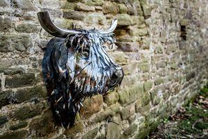 Stuart, la vache Ecossaise