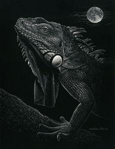 Night Iguana
