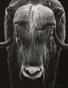Musk Ox I - Nathan Perry Fine Art