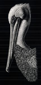 Pelican - Nathan Perry Fine Art
