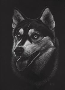 Siberian Husky - Nathan Perry Fine Art